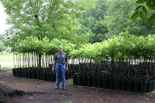 Woodard Pecan Nursery 919 965 3561 Home Garden At