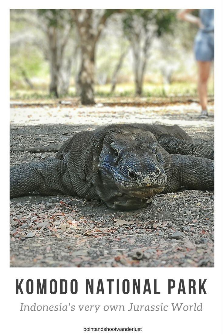 Komodo National Park Indonesia's very own Jurassic World