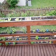 Hometalk :: It's time for a little Friday Link Love! Vertical gardening has been e…