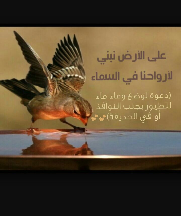 دعوة لوضع وعاء ماء للطيور ارجو نشر الرسالة Painting Art Bird