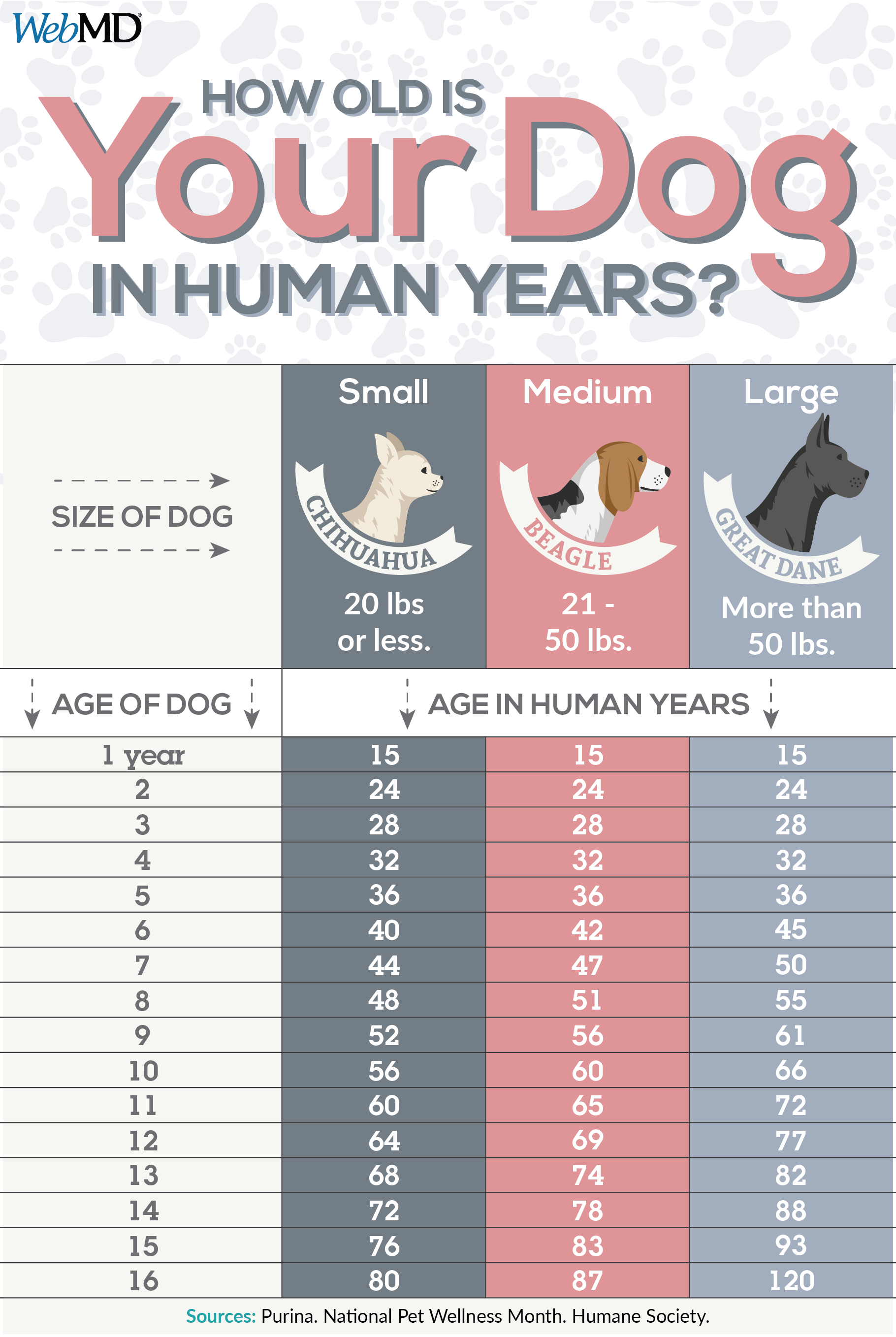 How To Calculate Your Dog S Age Dog Ages Dog Grooming Tips Dog Body Language