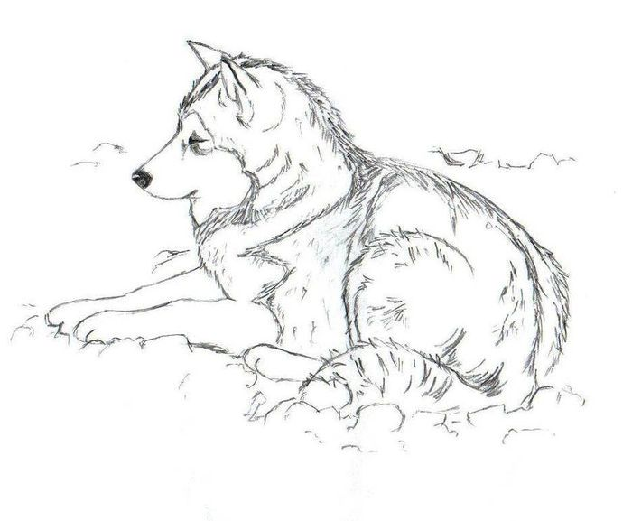 Husky Coloring Pages PDF - Free Coloring Sheets Puppy
