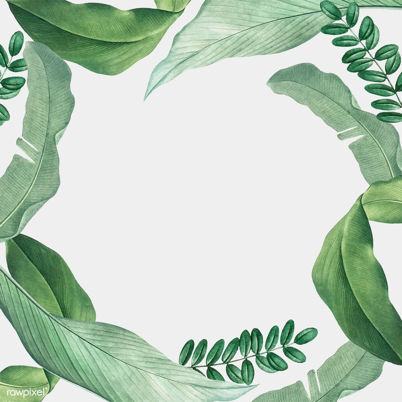 Download Premium Vector Of Hand Drawn Tropical Leaves Frame On A White Leaf Background Tropical Leaves Tropical Ferns, rubber fig trees and areca palms make the perfect houseplants. hand drawn tropical leaves frame