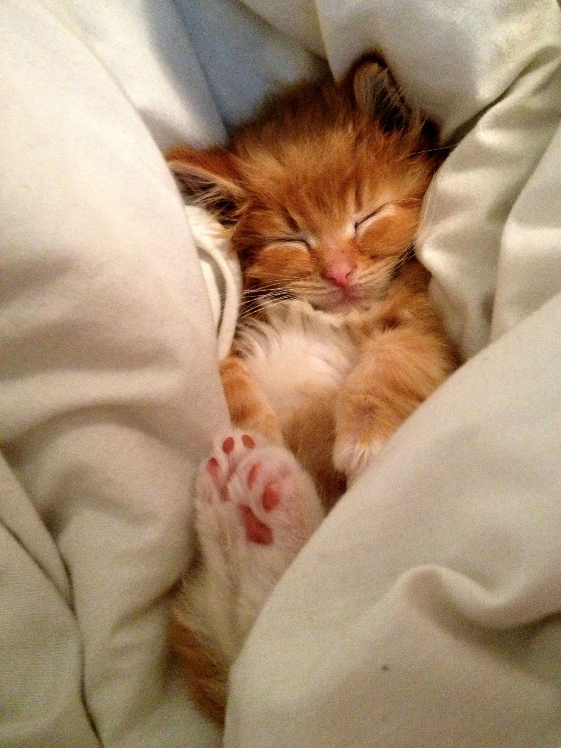 Pin By Joanna Ivanova On Kittens Nothing But Tiny Kittens Cute Cats And Kittens Cats Pet Birds
