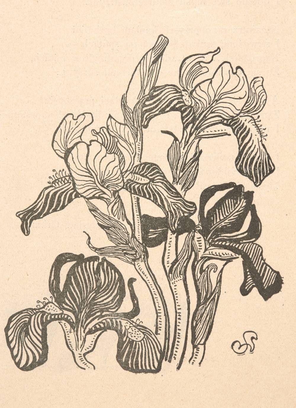 Stanis U0142aw Wyspia U0144ski Kosaciec Cztery Kwiaty Rozwini U0119te I