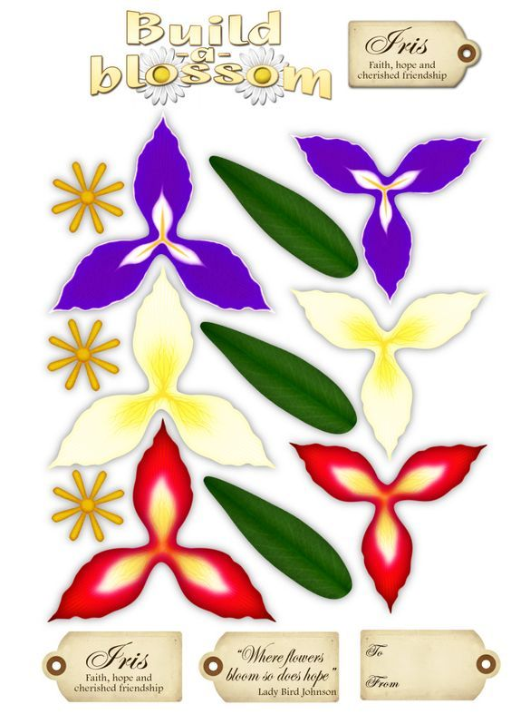 Build A Blossom Iris Flower Template Flower Printable Paper Roses