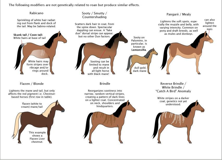 Other Colour Modifiers Of Horses Some Of Them Can Lead To Confusion With Roan Horses Detail Of The Poster Guide Horse Coloring Horse Color Chart Cute Horses