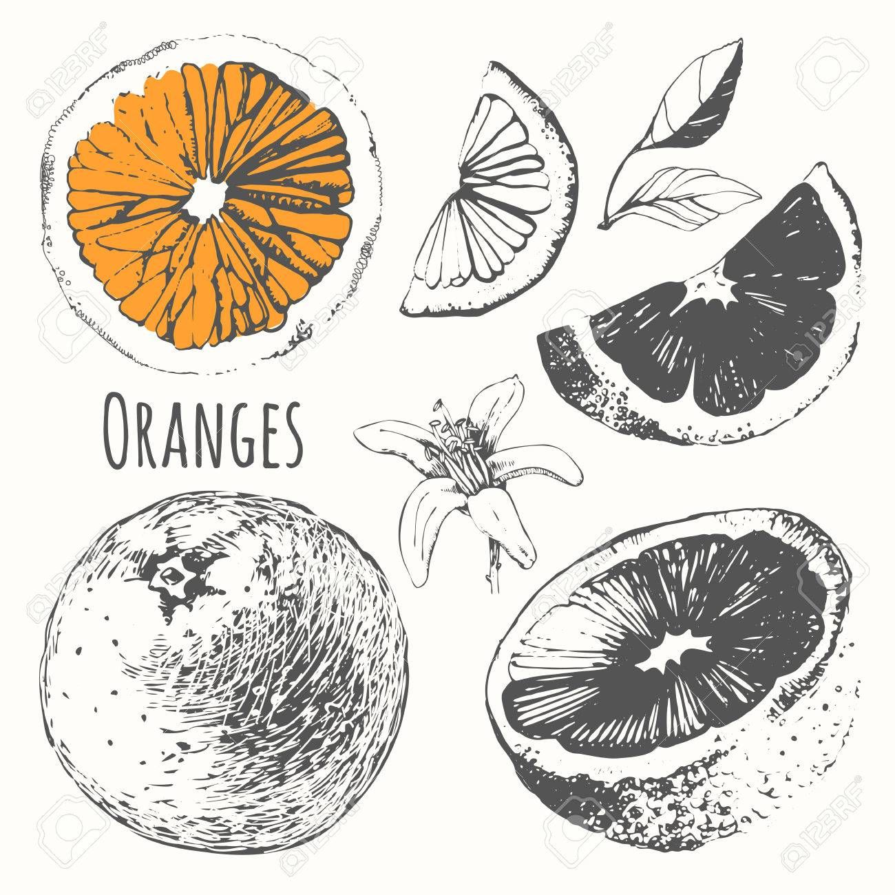 Vector Illustration With Hand Drawn Of Orange Black And White Cute Doodle Art Drawings Art Reference Photos