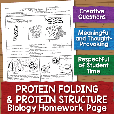 Protein Structure Worksheet Science Teaching High School Biology