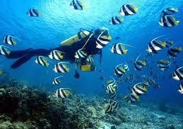 Billedresultat for rejser til maldiverne