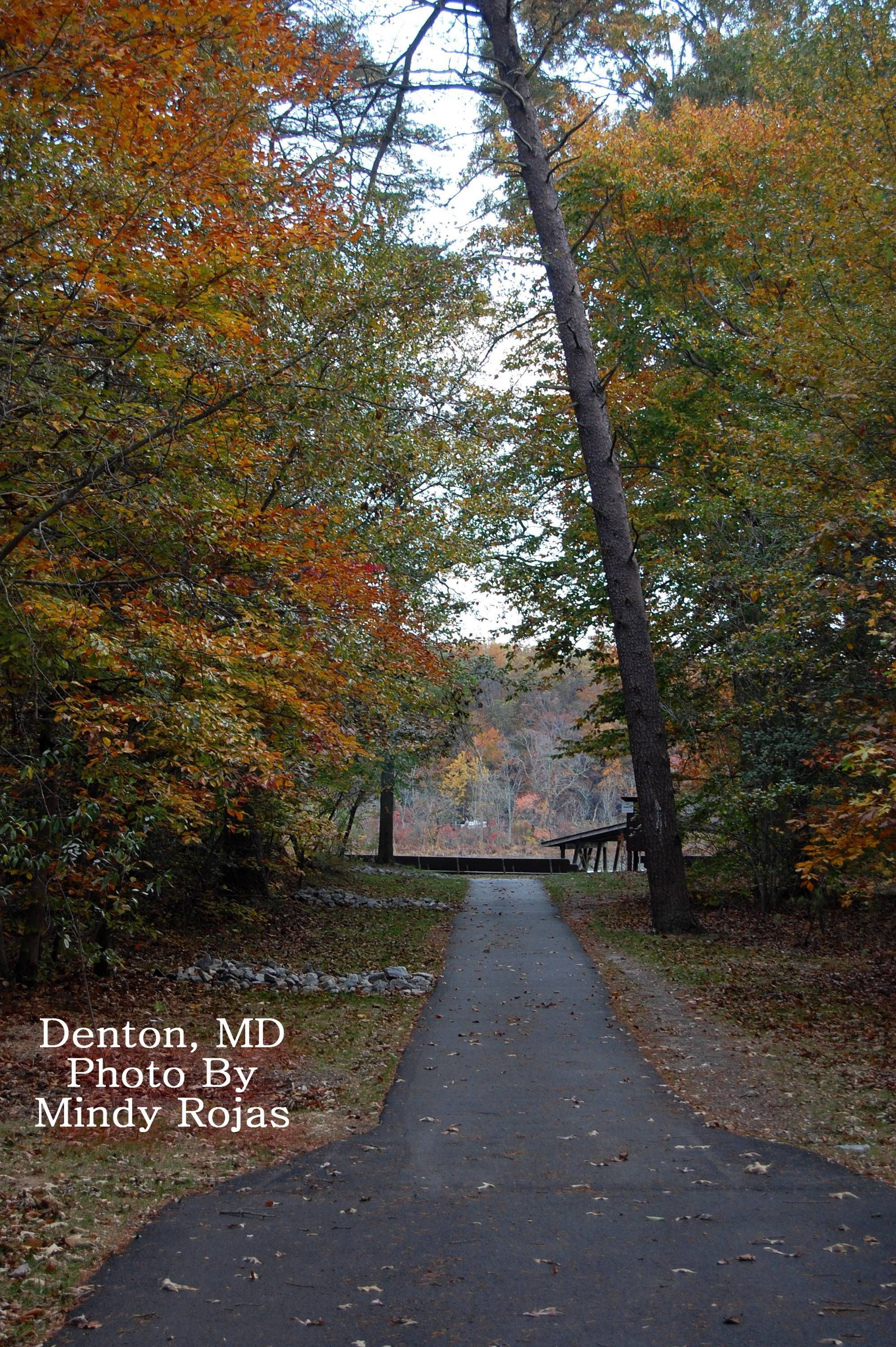 Trail in the woods Denton MD Maryland Pinterest