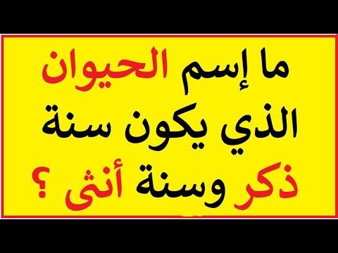 38 الغاز صعبة جدا مع الحل مخصصة لأذكي الأذكياء Youtube Arabic Calligraphy Calligraphy Education
