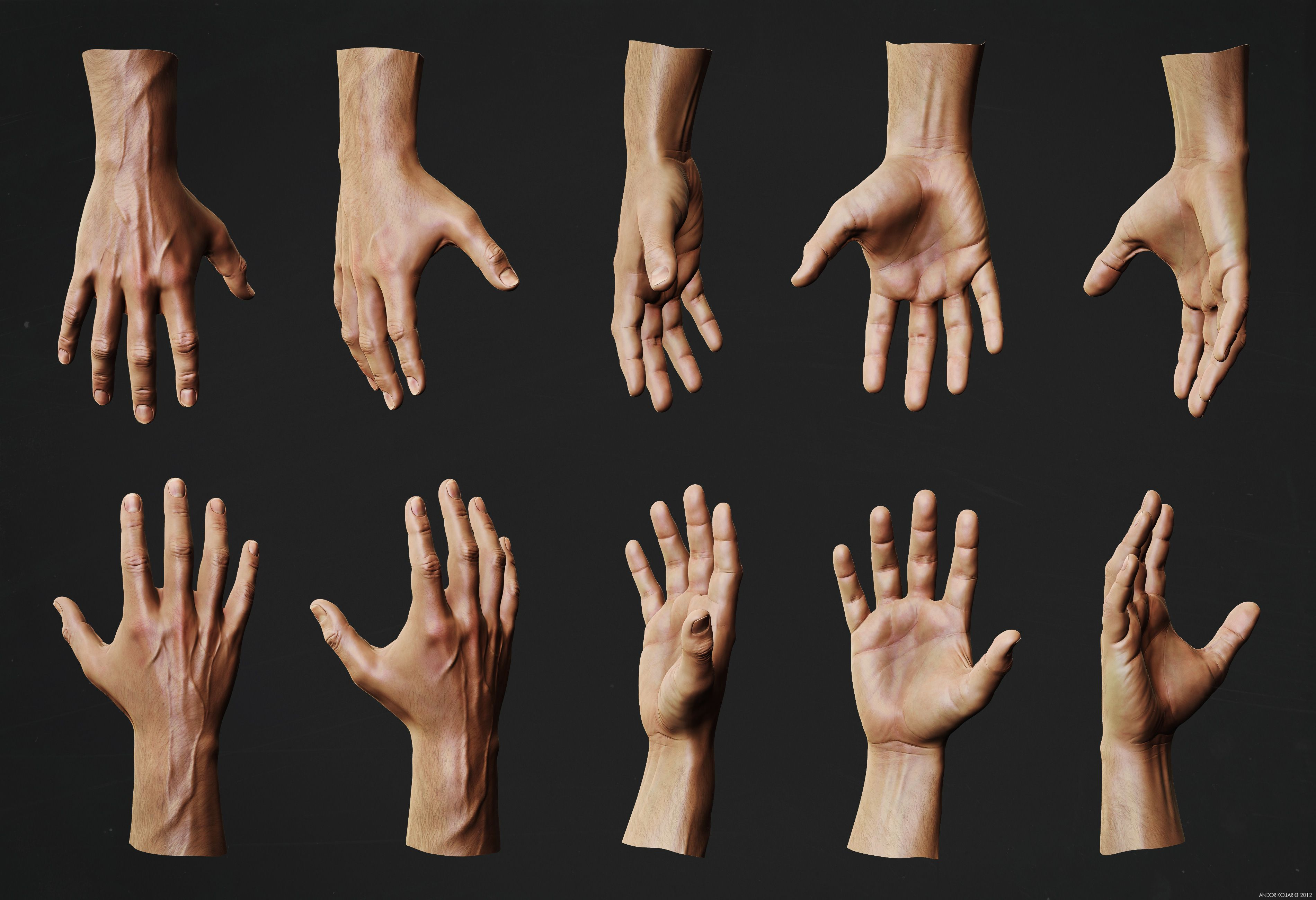 Hand Anatomy Study | Andor Kollar - Character Artist | Human anatomy ...