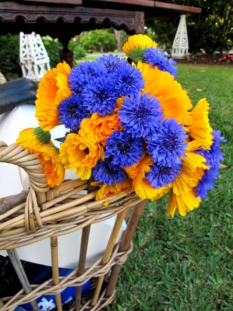 absolutely beautiful things cobalt and yellowy gold