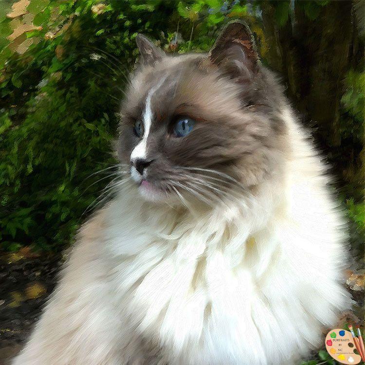 Ragdoll Cat Portrait 367 Cats, Cat photography, Cat facts