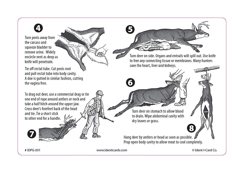 Amazon Pak It Guide To Field Dressing A Deer