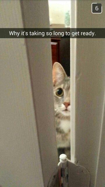 My Husband Sent Me This Snap Of Our Cat Waiting Outside The Bathroom Door As Usual So Cute Bathroom Doors Door Handles Doors