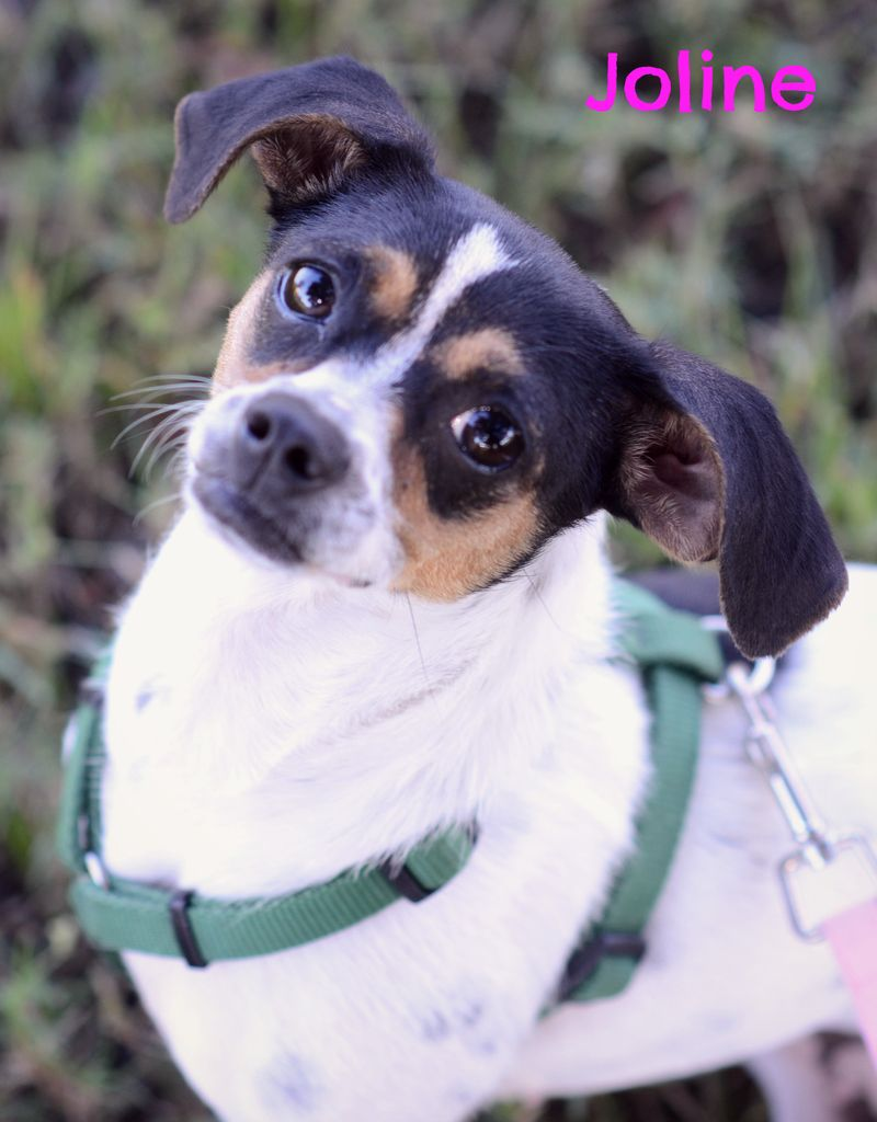 Adopt Joline on Animal rescue, Animals, Animal stories