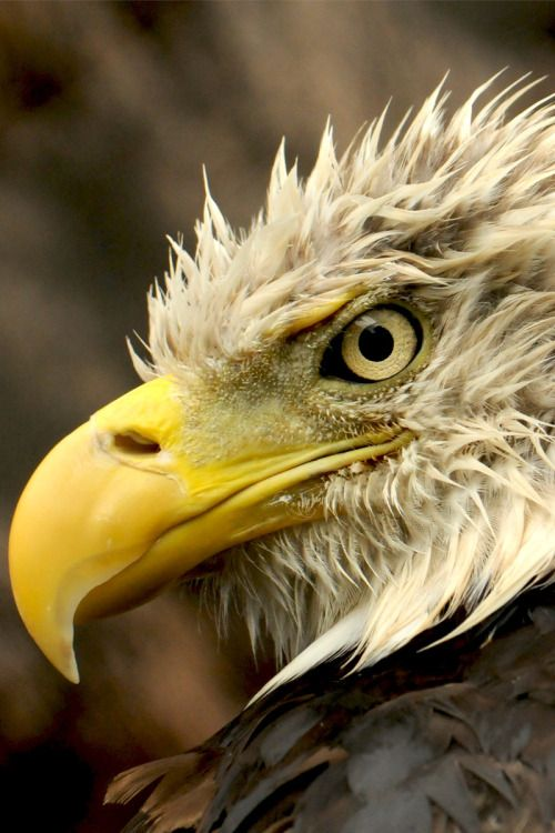 w-canvas:  The Eagle Has Landed | Photographer