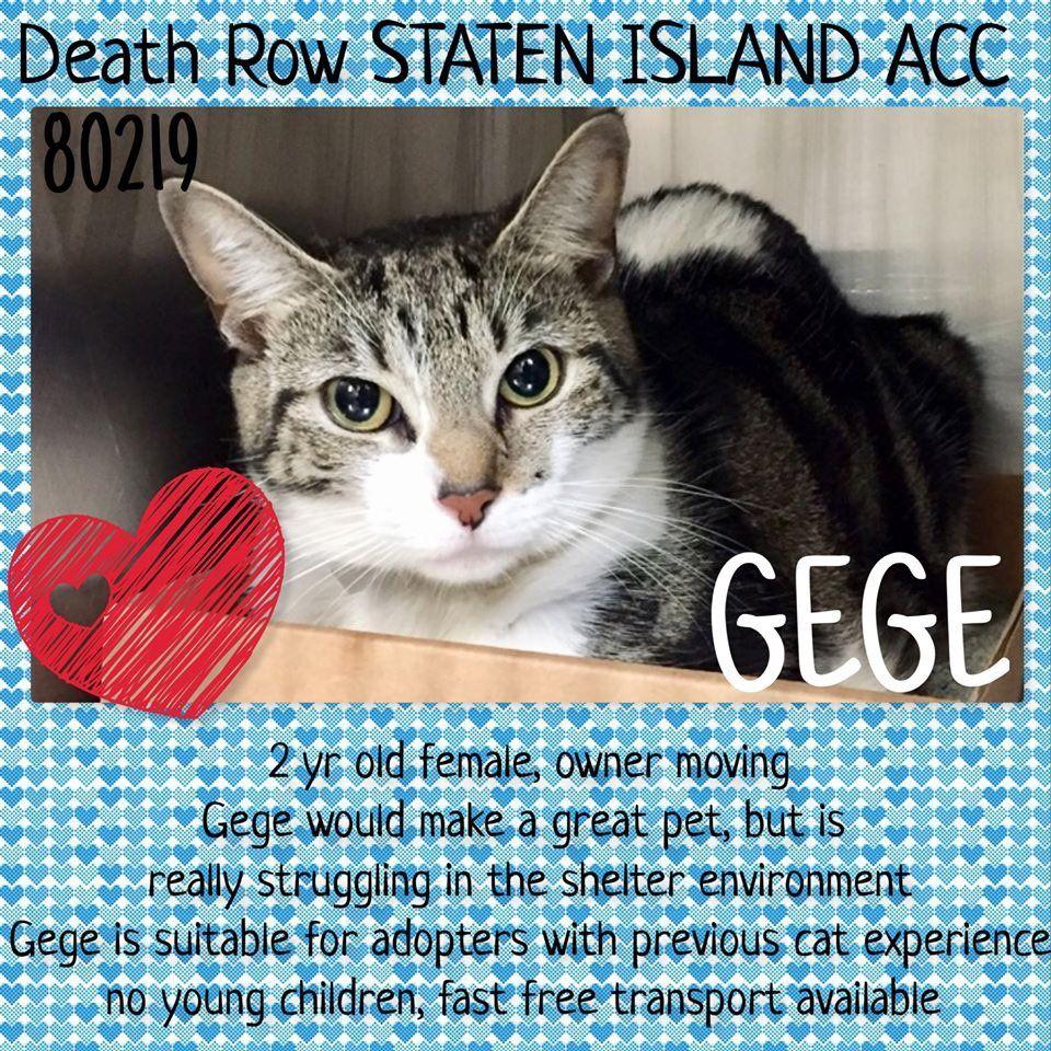 catsrangels2 🐈🌸🌷🐶🍂 ️🍁 on Saving cat, Cats, Staten island