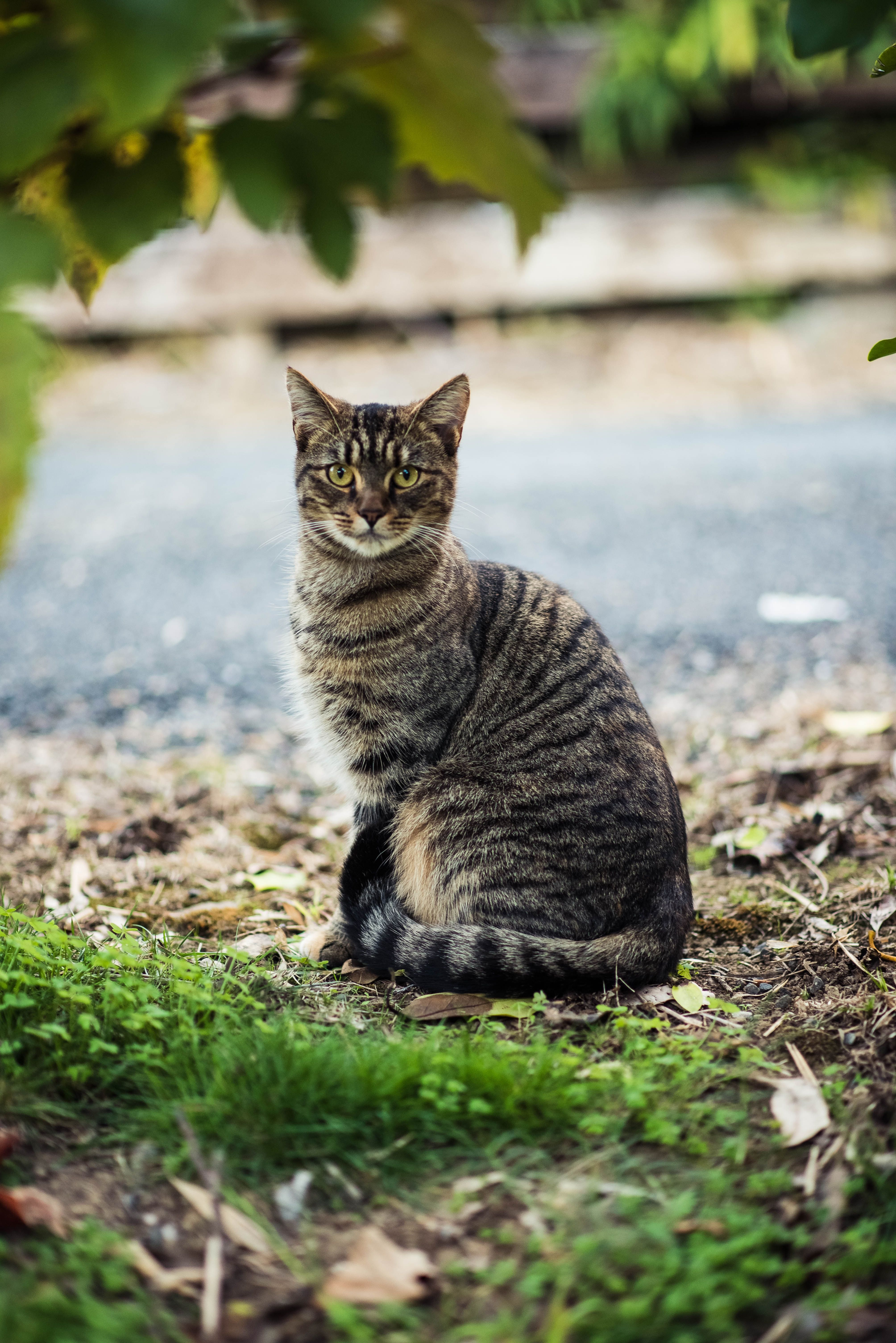 Black And Gray Tabby Cat Sitting On The Ground With Images