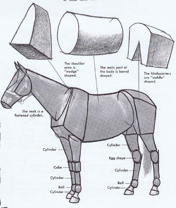 Как рисовать лошадей | лошадь | Pinterest | Anatomy, Horse and Drawings