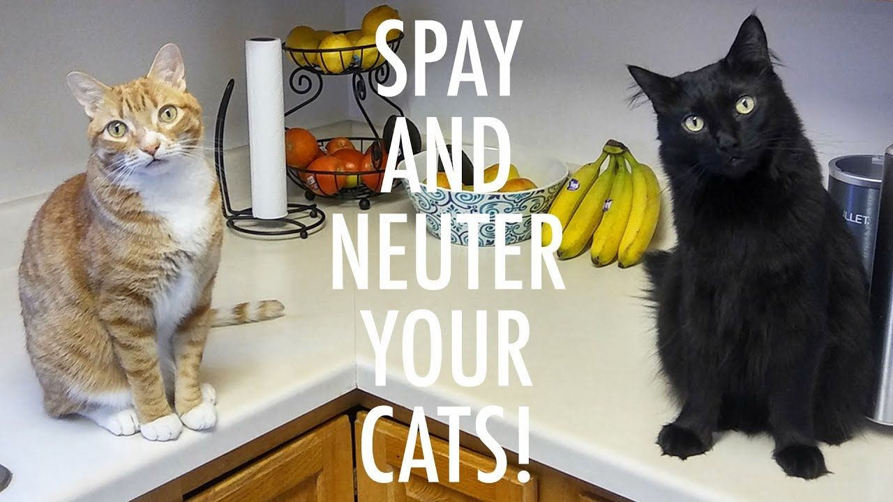 What If Nobody Spayed Or Neutered Their Cats Elderly Dog Care Cat Illnesses Why Do Cats Purr