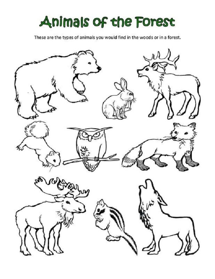 Animal Classification Coloring Pages
