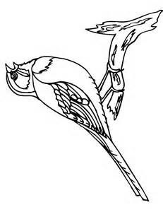 bird coloring pages  bing images  bird coloring pages