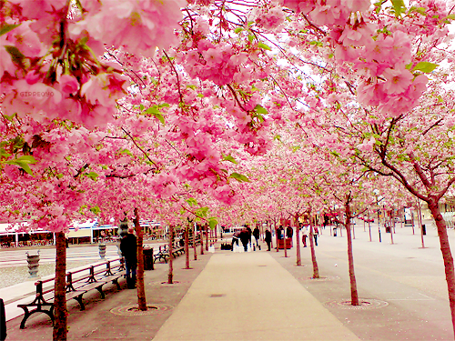 Tumblr Wonders Of The World Beautiful Places Places