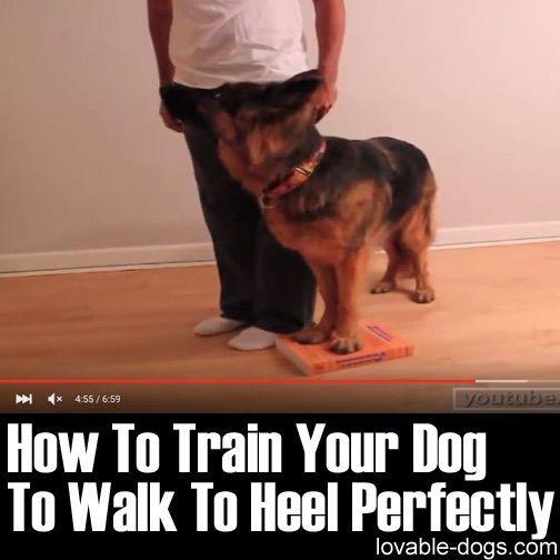 Dog Training Tips On How To Train Your Dog Dog Training Dogs