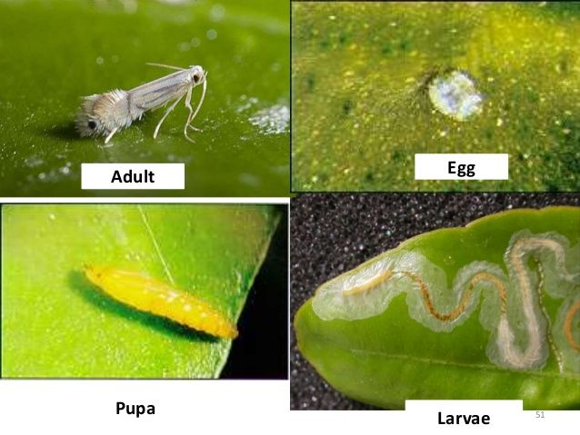 Image result for insect egg identification   Insect ID   Pinterest