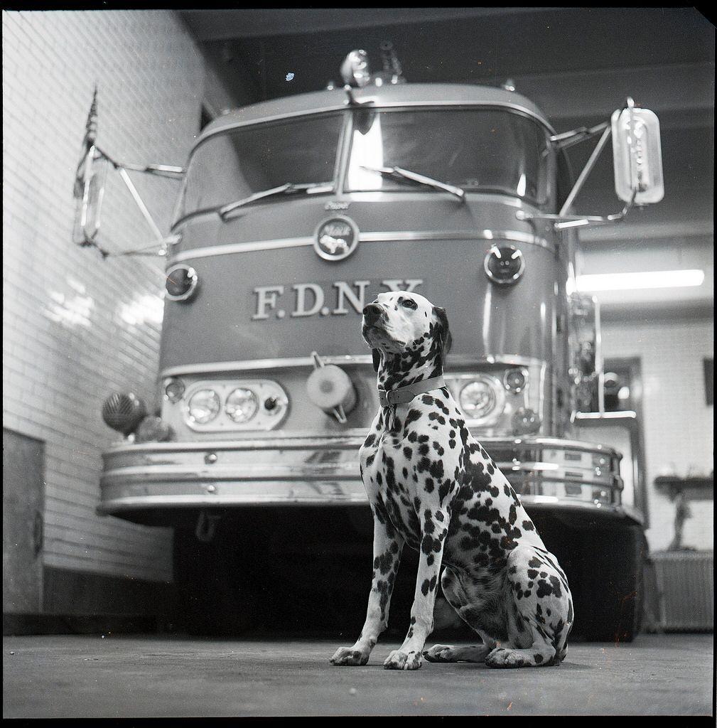 1970 02 Bx Eng 45 Dalmation 005 Fdny Firehouse Fire Trucks
