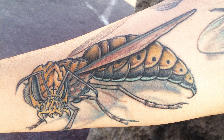 Metal Wasp