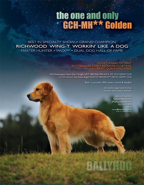 Biss Gch Richwood Wing T Workin Like A Dog Mh Wcx Ddhf Can Wc