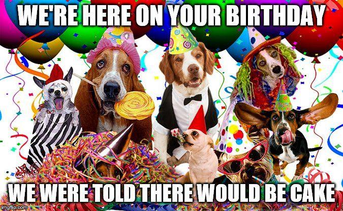 ... Birthday,dogs,cake,happy,happy