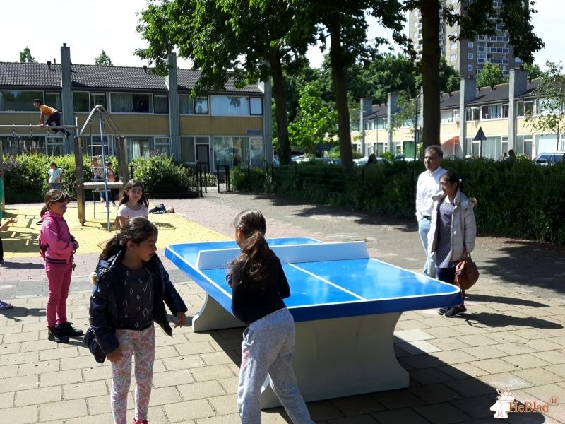 Pingpongtafel Afgerond Blauw bij CBS de Wadden in Haarlem
