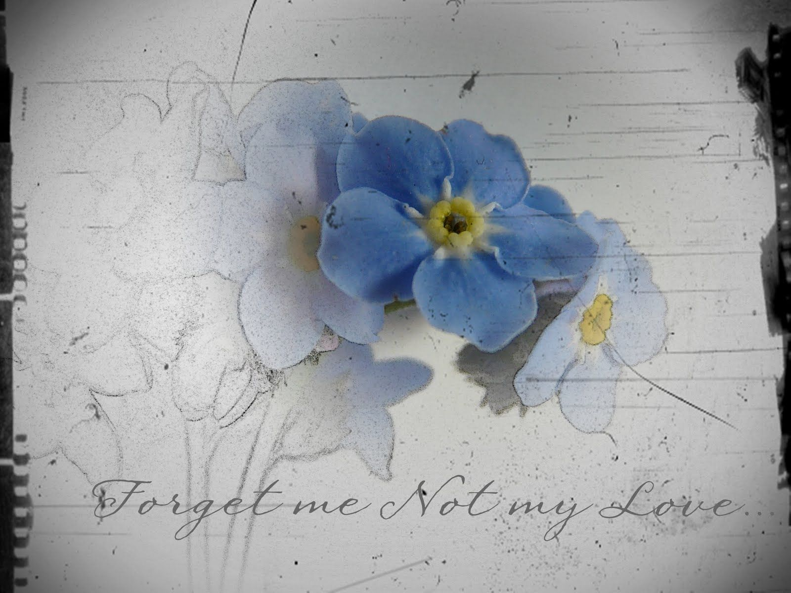 Forget me not flower drawings how to draw forget me not forget me not flower drawings how to draw forget me not ccuart Image collections