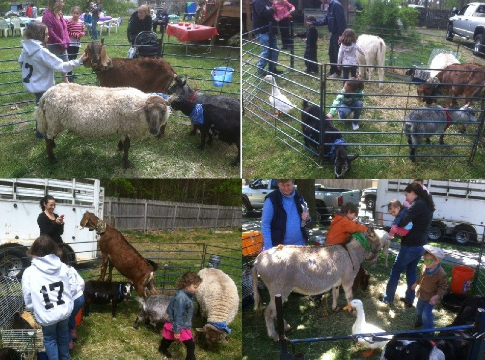 Having fun with our traveling petting zoo at backyard
