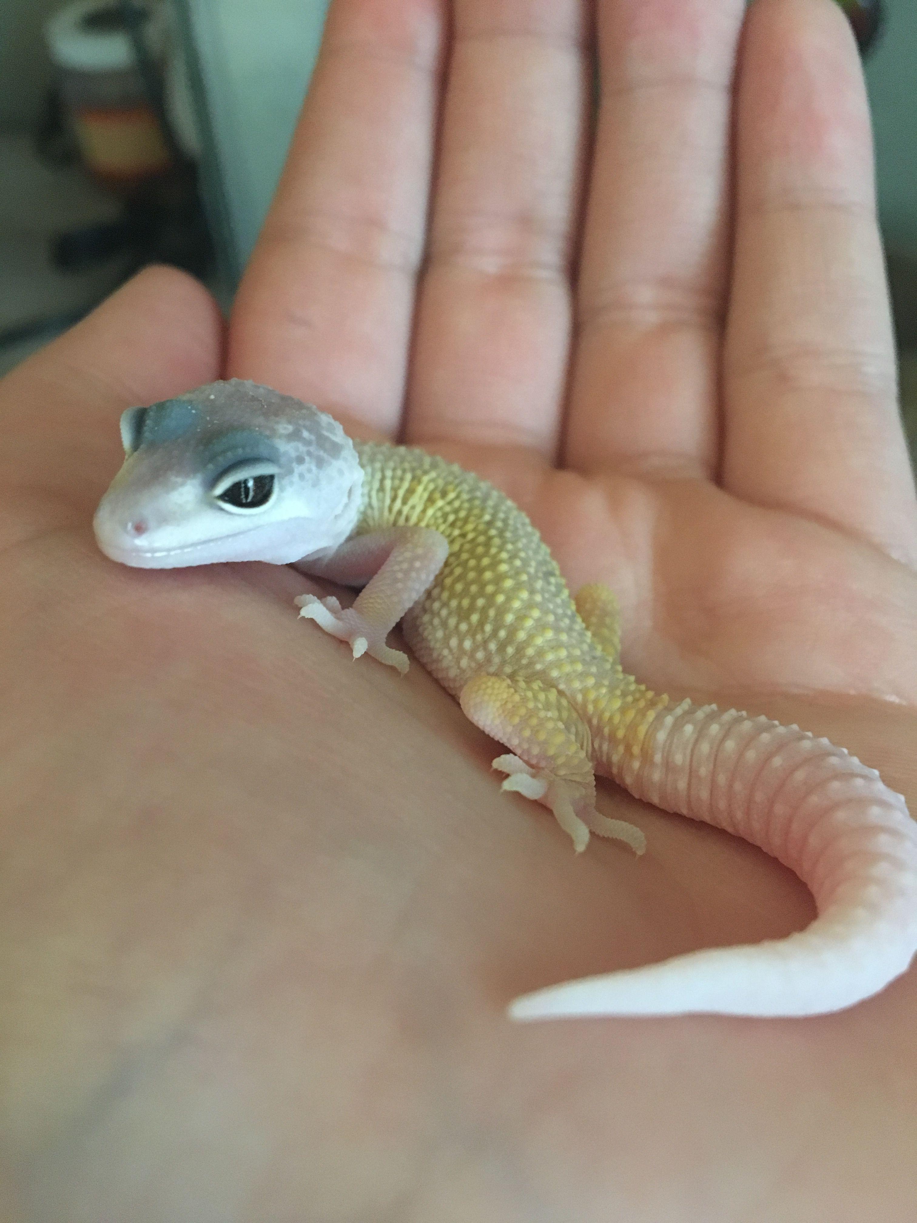 Pin By Manush Simonyan On Randall Cute Reptiles Pet Lizards Cute Lizard