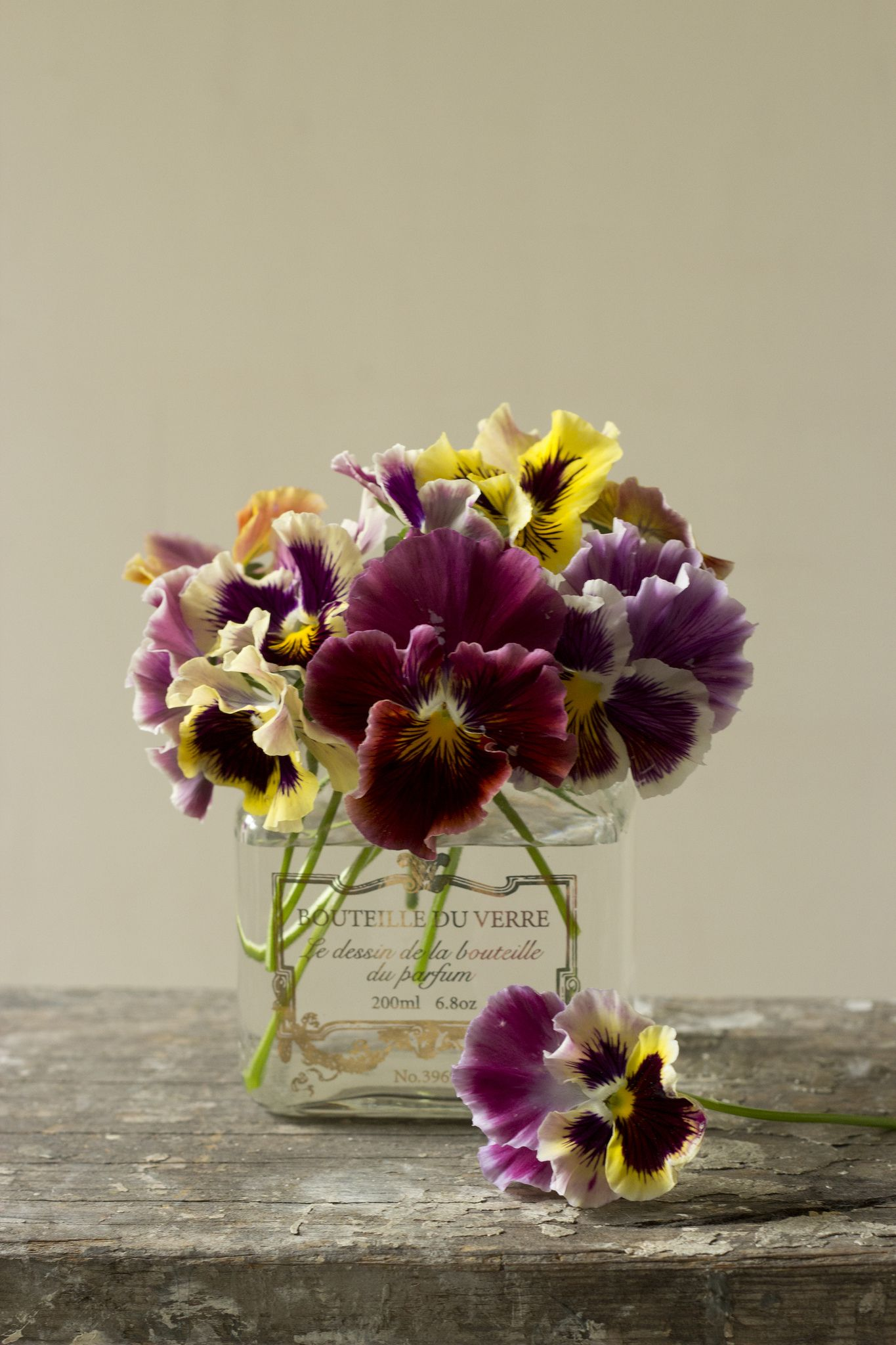 Viola Viola Beautiful Flower Arrangements And Beautiful Flowers
