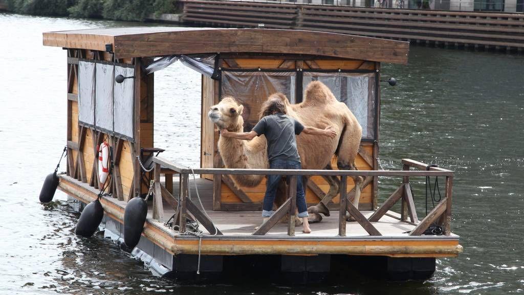 Berlin Spree - Kamel auf Floßboot :D #berlin #floß #kamel #funny #spree