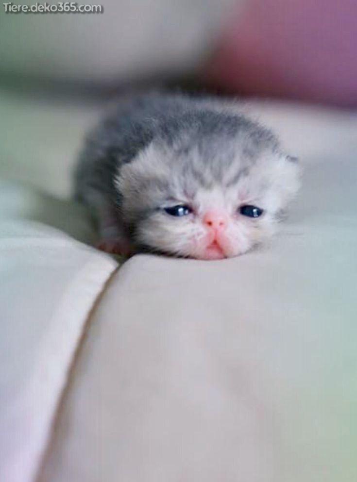 Grossartige Niedlichste Katzen Und Katzchen Cute Baby Animals Cute Cats Cute Animals