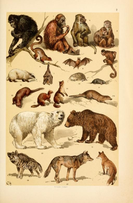 of Wild Animals, Insects, and Marine Life from Antique