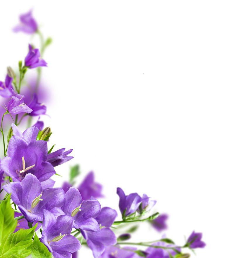 flores-color-lila-sobre-fondo-blanco-para-escribir-tu-propio-mensaje ...