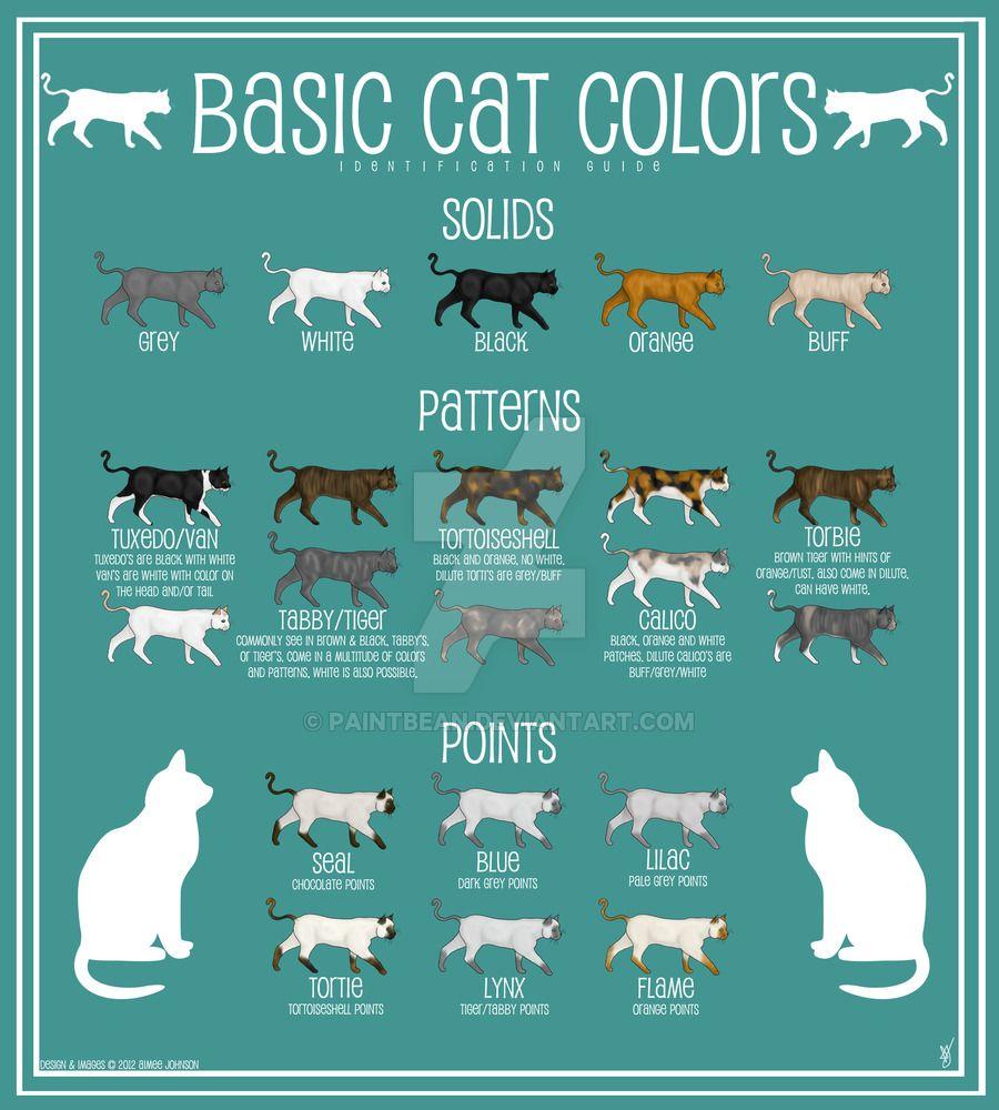 cat colors Google Search Cat colors