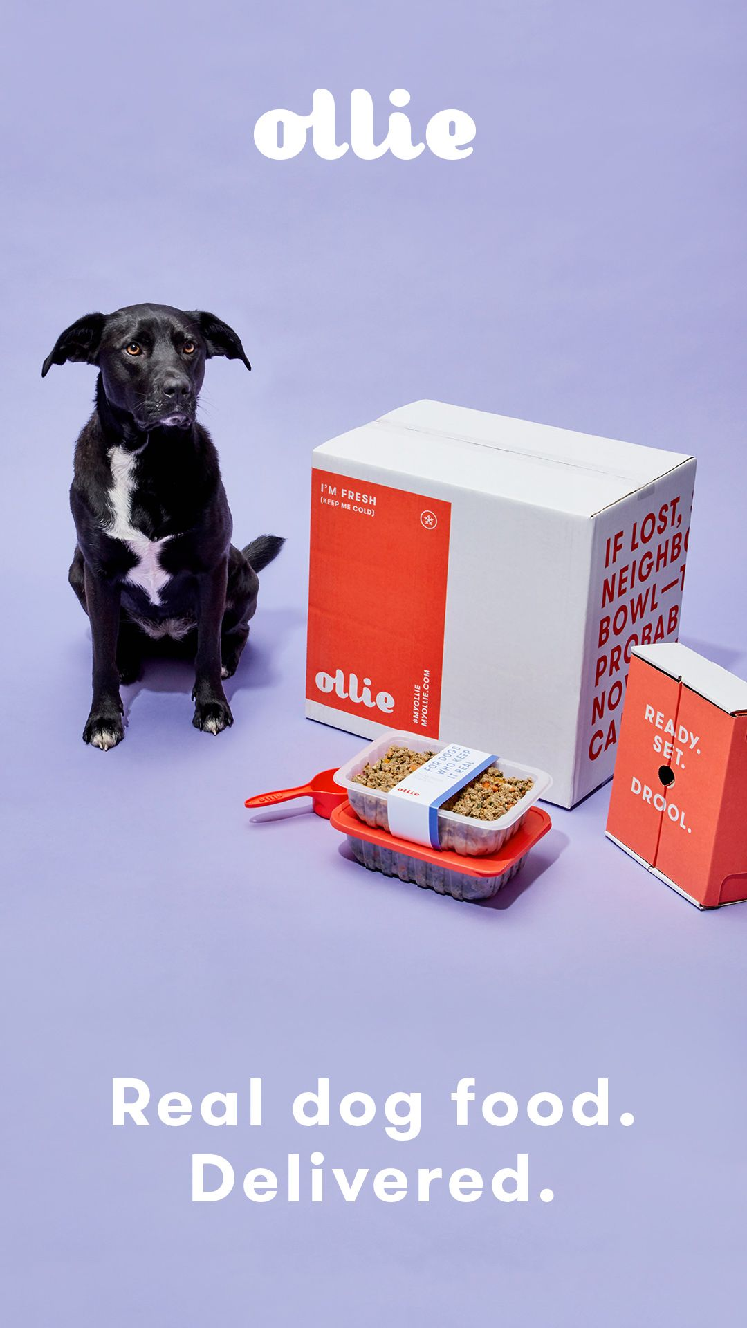Get 50 OFF your first box of Ollie Humangrade dog food