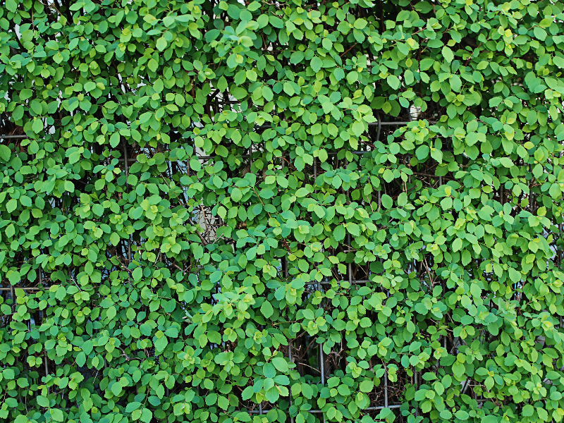 Green Leaves Wall Texture Green Leaves Textured Walls Green