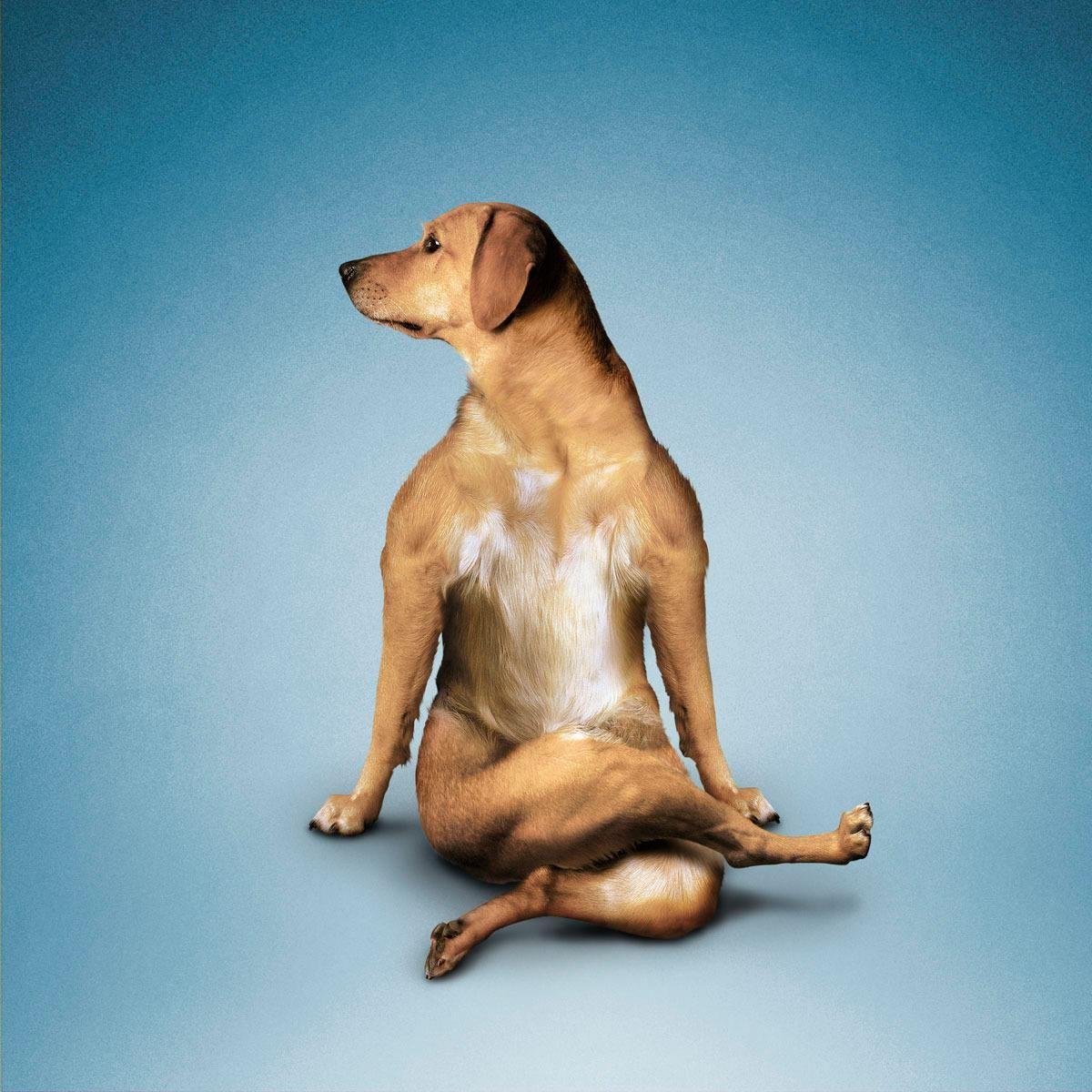 позы йоги картинки прикольные основания