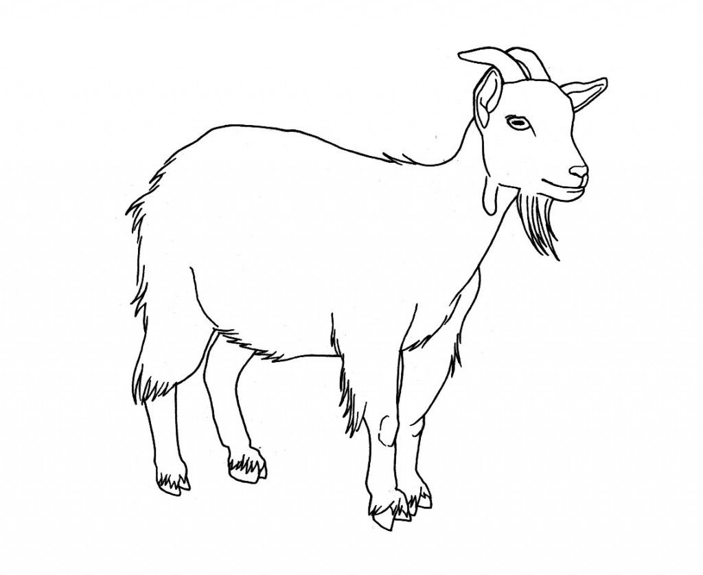 Goat coloring pages photos